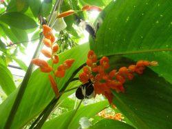 butterfly and flower reserva mundo verde