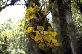 cloud forest orchid 2
