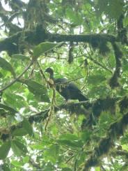 RMV bird in tree