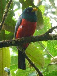 RMV bird photo