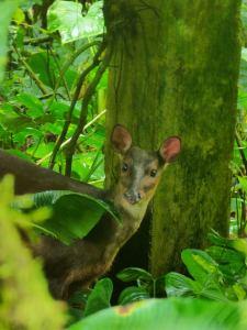 RMV deer photo