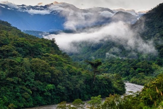jungle-river-valley-in-the-cloud-forest-2mg.jpg