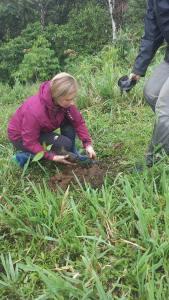 RMV treeplanting